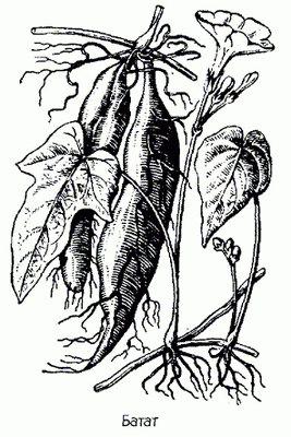 гранатовые корки от паразитов