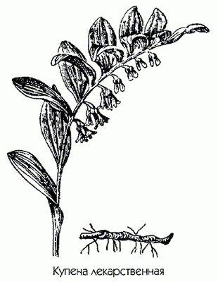 гранатовые корки от паразитов рецепт