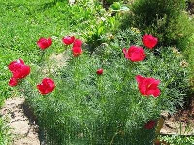 Лазоревый цветок скачать бесплатно торрент